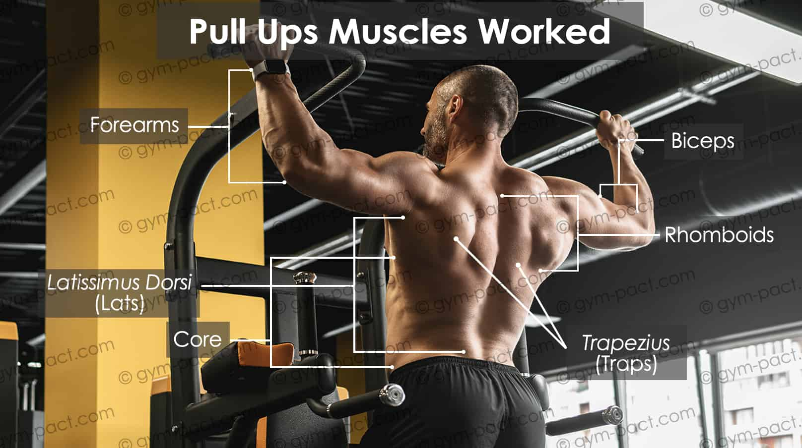 pull up muscles worked