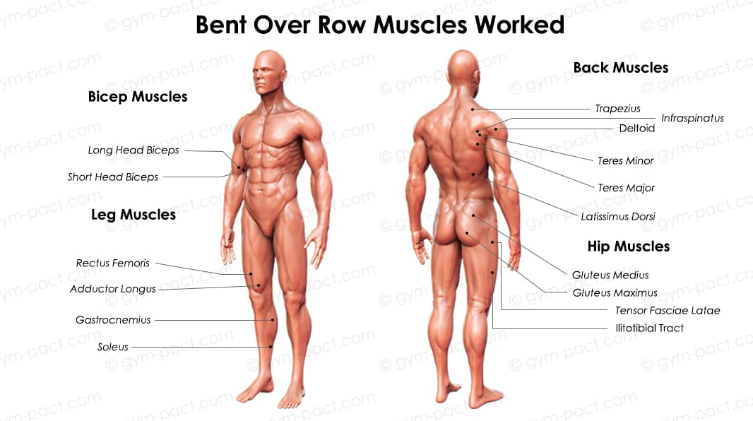 bent over row muscles worked