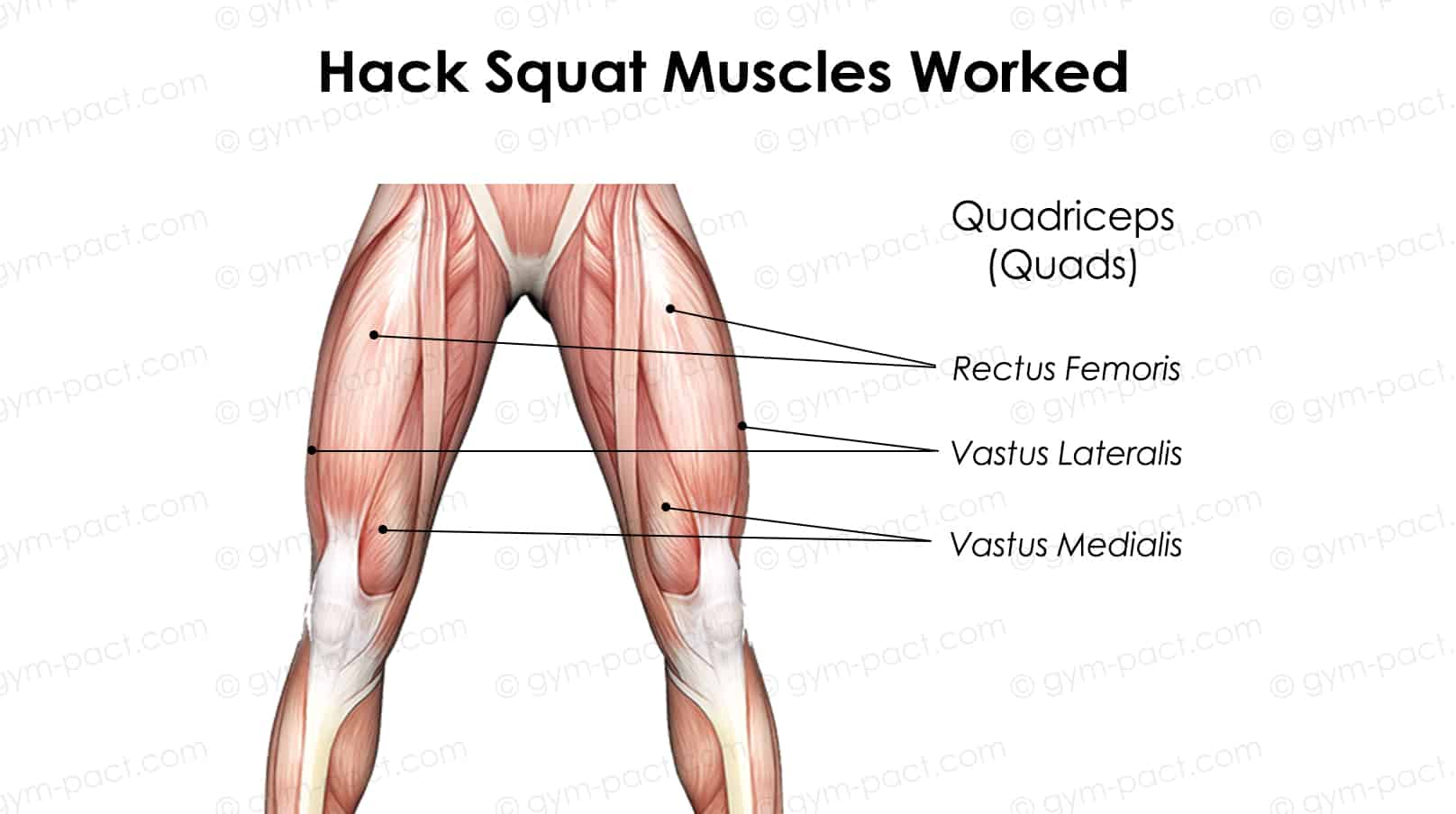 Hack Squat Muscles Worked